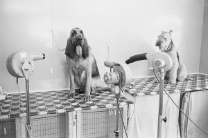 Drying dogs