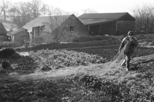 Netting Cabbages by James Ravilious