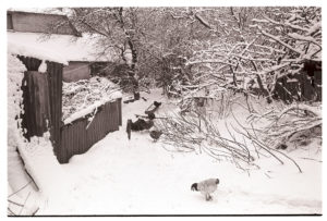 Poultry in snow by James Ravilious