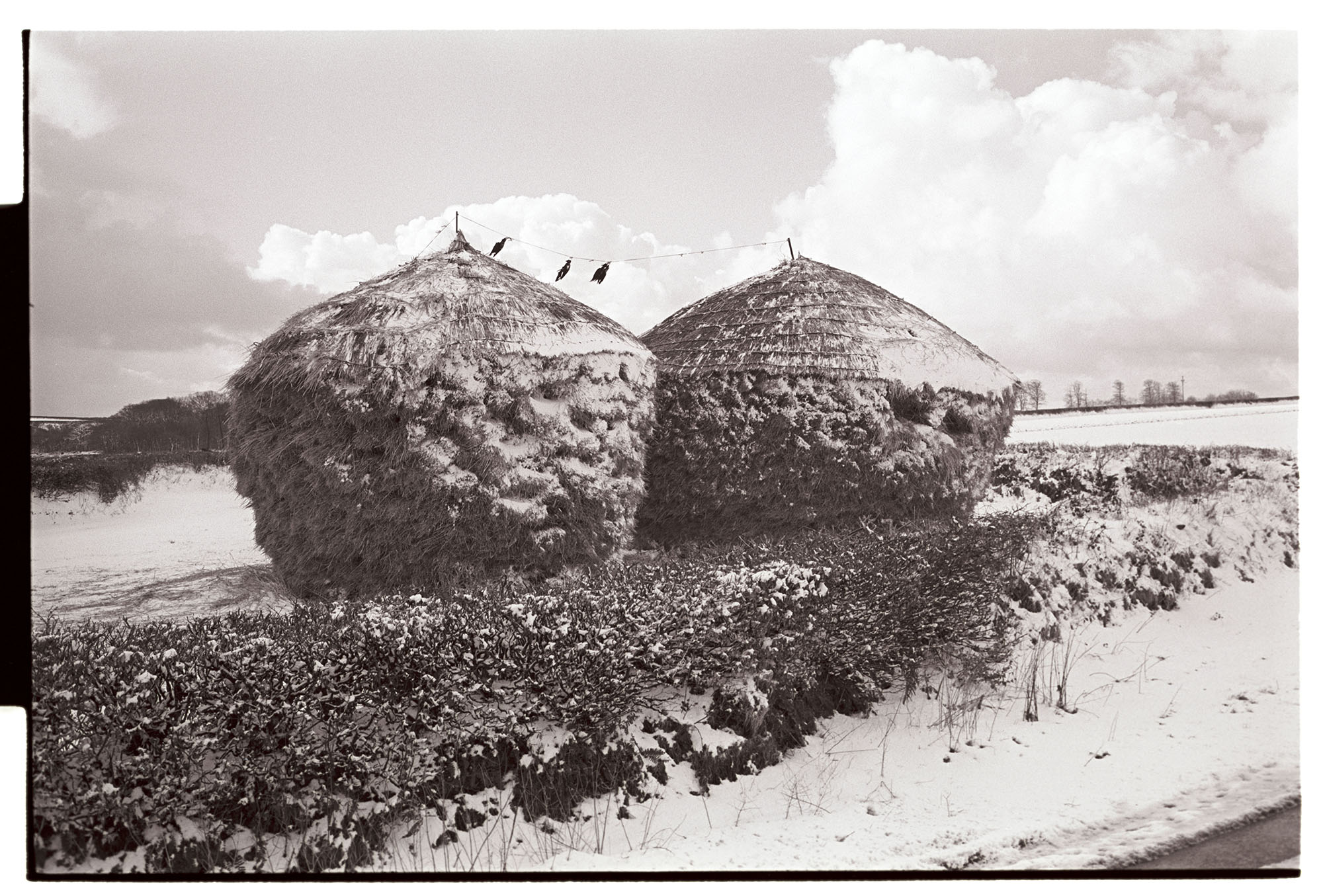 Snow. Two thatched wheatricks with snow with crows strung between them. <br /> [Two thatched wheat ricks in a field covered with snow at Westacott, Riddlecombe. Three dead crows are strung between the wheat ricks.]