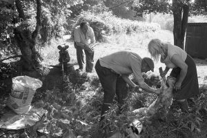 George Ayre and Jo Curzon spraying a shorn lamb by James Ravilious