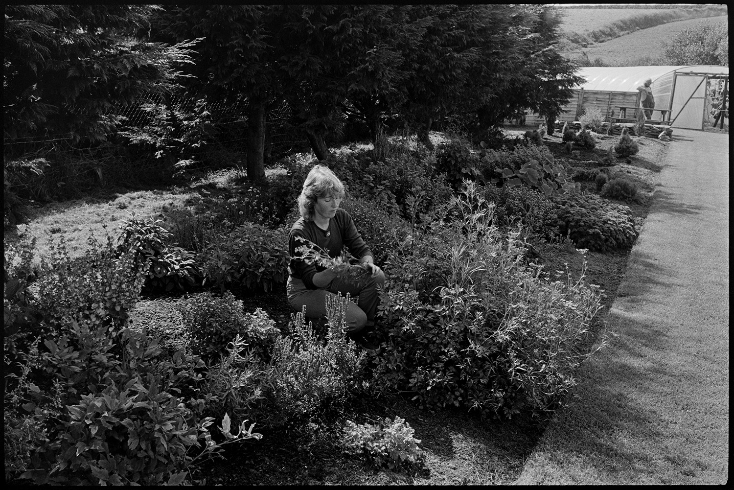 Woman working on herb farm herb garden and shop, chickens. <br /> [Sally Hollis checking herbs in a bed at Darracott Farm, Welcombe. A polytunnel can be seen in the background.]