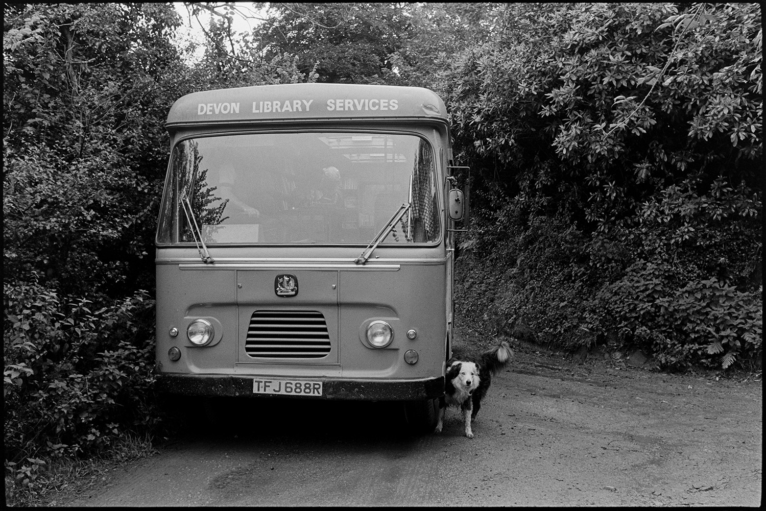 Library van parked in country lane, dog peeing on wheel. <br /> [A dog weeing on the front wheel of a library van parked in a lane by trees, possibly near Holsworthy.]