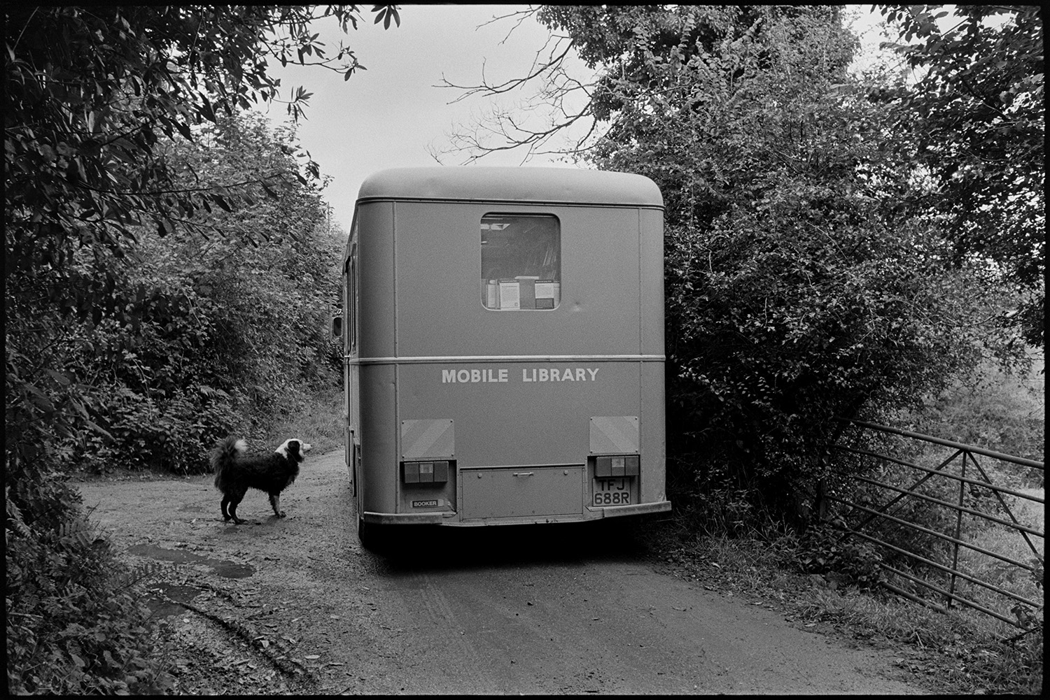 Library van parked in country lane, dog peeing on wheel. <br /> [A dog looking at a library van parked in a lane with trees, possibly near Holsworthy.]