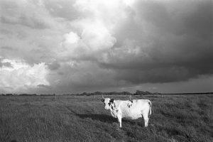 Cloudy landscape by James Ravilious
