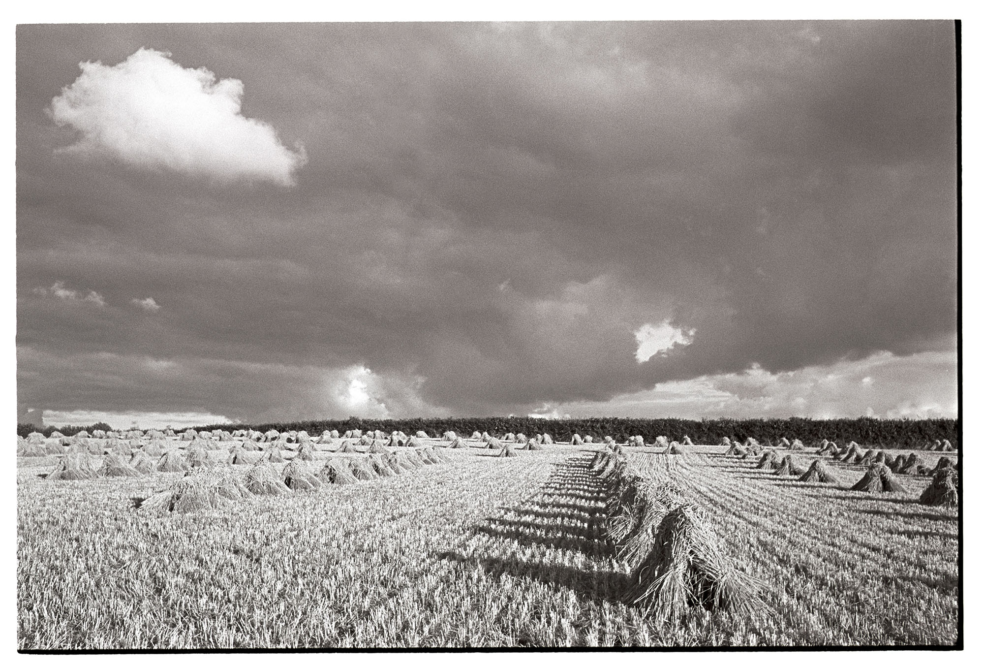 Corn stooks in evening sun with stormy cloudy sky. <br /> [Corn stooks in a field at Windwhistle, near Upcott, Dolton, in the evening. The sun is shining through a cloudy sky.]