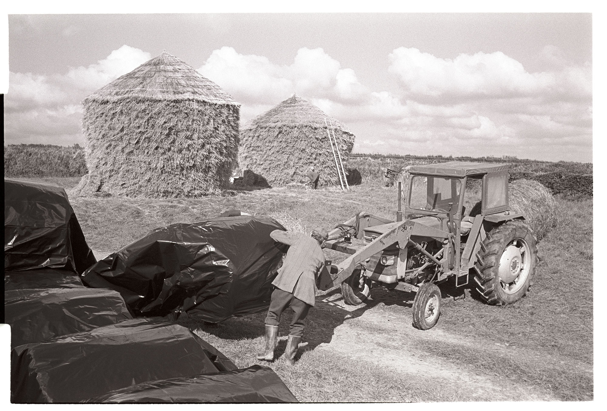 Farmer wrapping large round bales in polythene, round thatched wheat ricks behind. <br /> [Dudley Middleton wrapping hay bales in polythene in a field at Westacott, Riddlecombe. The bales are on a fork lift attached to a tractor. Two thatched wheat ricks are in the background. A ladder is propped against one of the ricks.]