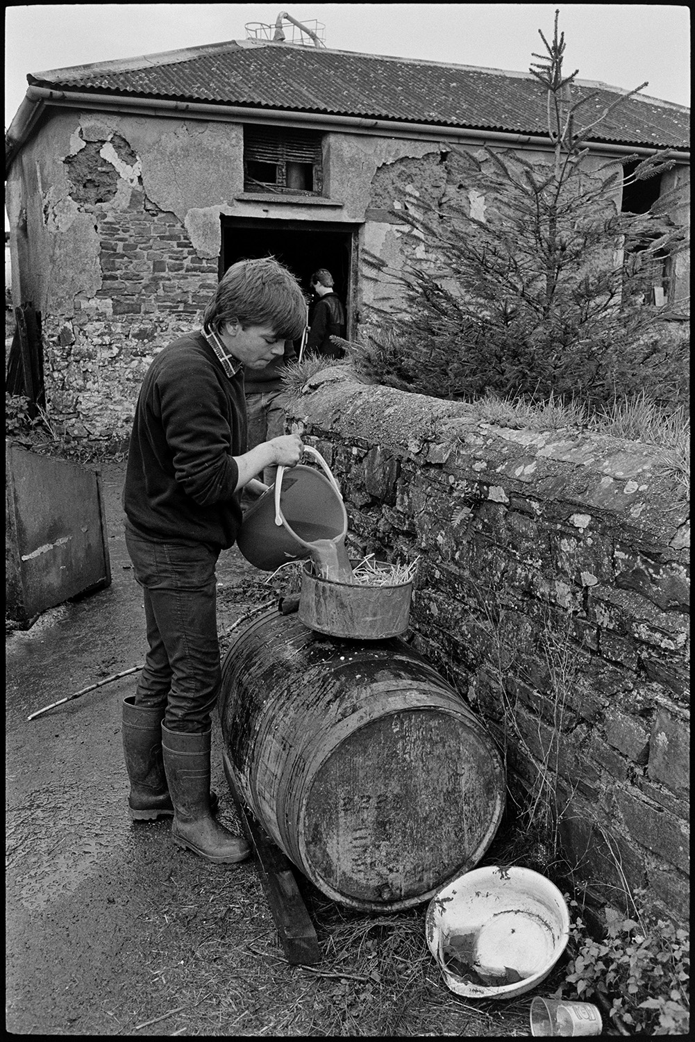 Farmers pressing cider in barn. Baskets of apples poured into crusher.<br /> [A young man pouring cider through a straw strainer into a barrel in the farmyard at Spittle, Chulmleigh. A stone barn with a corrugated roof is in the background.]
