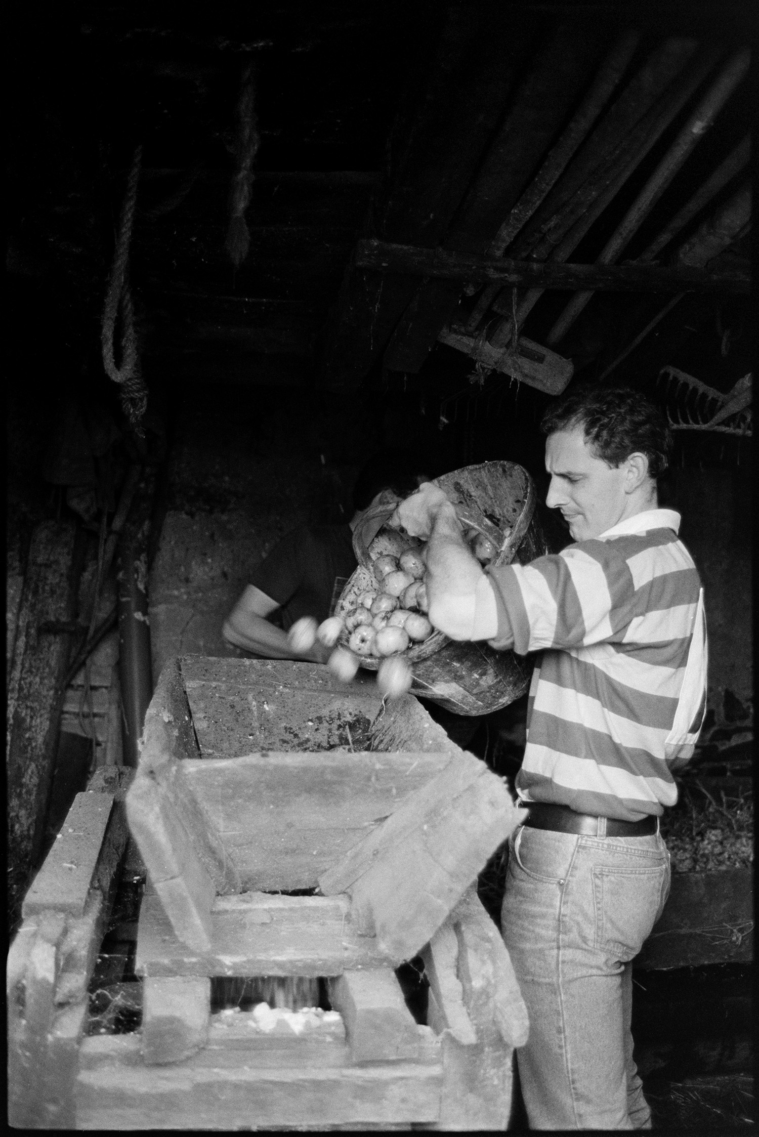 Farmers pressing cider in barn. Putting apples in crusher. See b02767 Old archive for picture of Bill Bending ploughing in 1941?<br /> [A man emptying apples from a bucket into an apple crusher, in a barn at Spittle near Chulmleigh.]