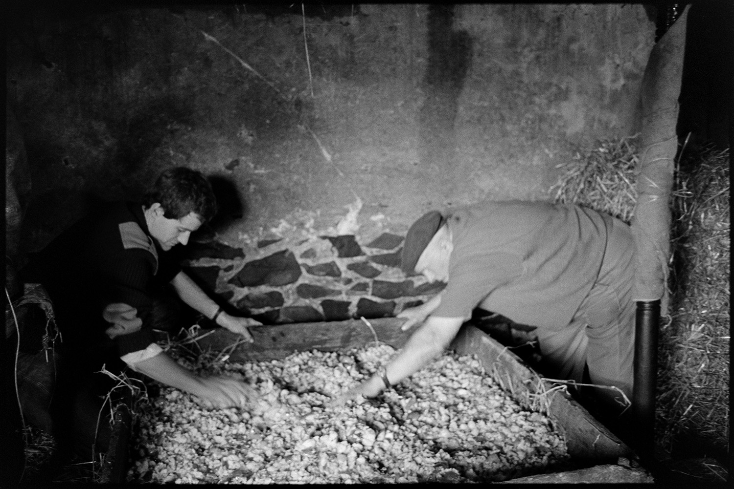 Farmers pressing cider in barn. Putting apples in crusher. See b02767 in the Old Archive for picture of Bill Bending ploughing in 1941?<br /> [Bill Bending, on the right, and another man spreading apple pulp in a cider press in a barn at Spittle, near Chulmleigh.]