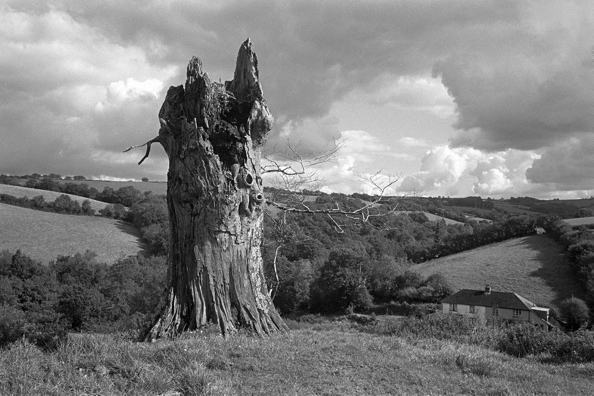 Trunk of old beech tree in clouded landscape. <br /> [The trunk of a dead beech or oak tree in a field at Spittle, Chulmleigh. A landscape with fields, trees, a farmhouse and clouds is in the background.]