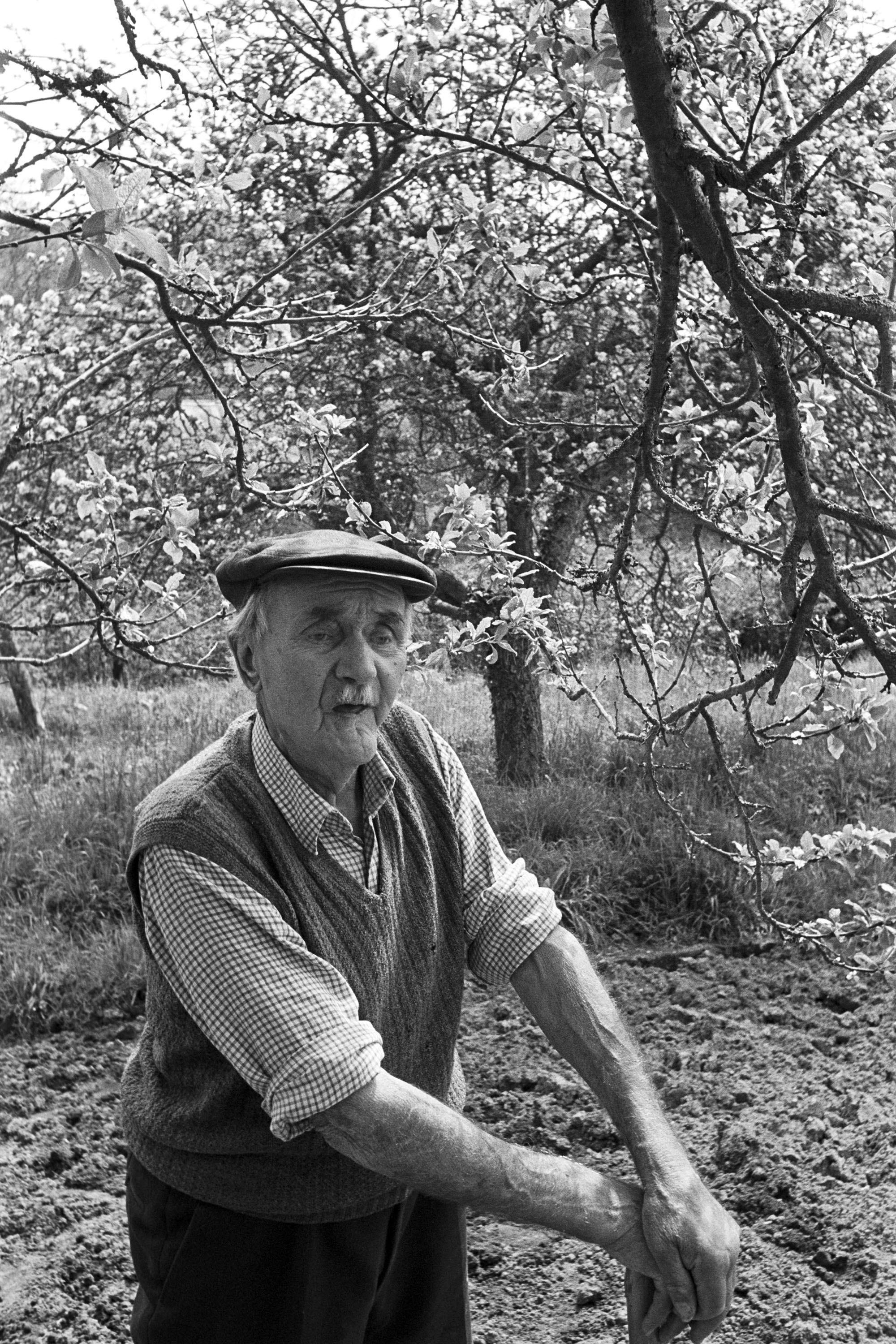 Man gardening beside orchard talking to photographer. <br /> [Mark Germon gardening by an orchard in Lustleigh. He is leaning on a tool. Fruit trees can be seen in the background.]