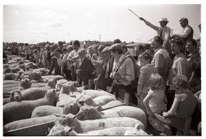 Sheep Fair by James Ravilious