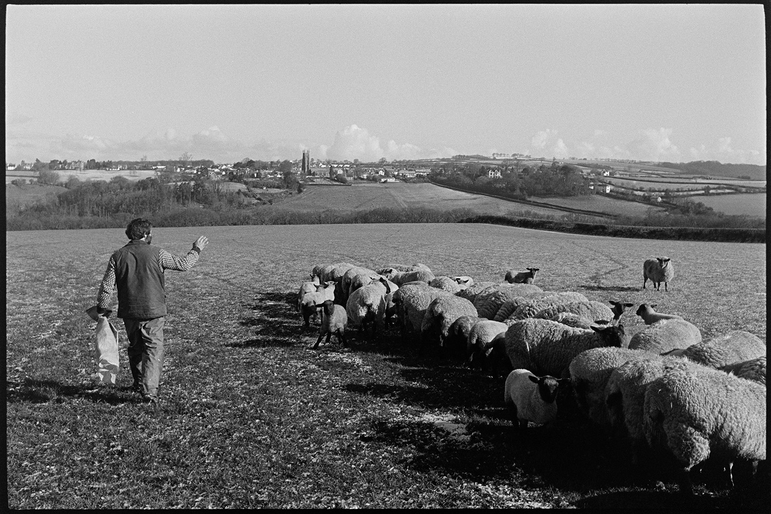 Snow, farmer feeding and counting sheep. <br /> [A man counting sheep after feeding them in a field at Parsonage Farm, Chulmleigh. The town of Chulmleigh, including the church tower can be seen in the background.]
