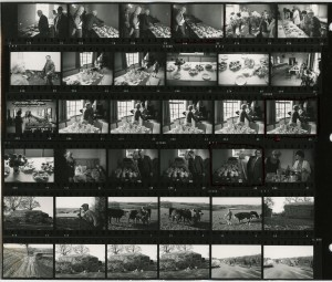 Contact Sheet 313 by James Ravilious