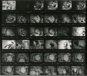 Contact Sheet 542 by James Ravilious