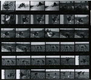 Contact Sheet 707 by James Ravilious