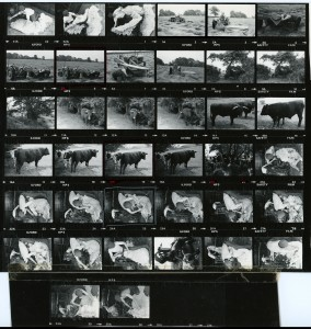 Contact Sheet 749 by James Ravilious