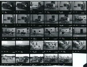 Contact Sheet 1104 by James Ravilious
