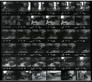 Contact Sheet 1180 by James Ravilious