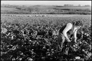 Untitled by James Ravilious